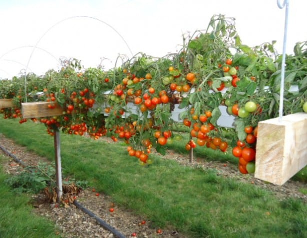 Where To Find Pick Your Own Fruit And Vegetable Farms Orchards | Rachael Edwards